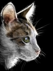 cat-scraperboard-psd-copy