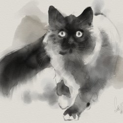 bw-cat-2