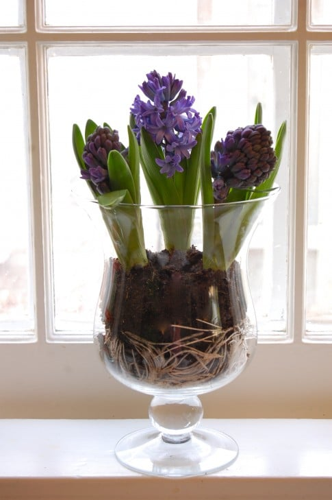 Hail To The Hyacinth Ways To Display The Art Of Doing Stuff