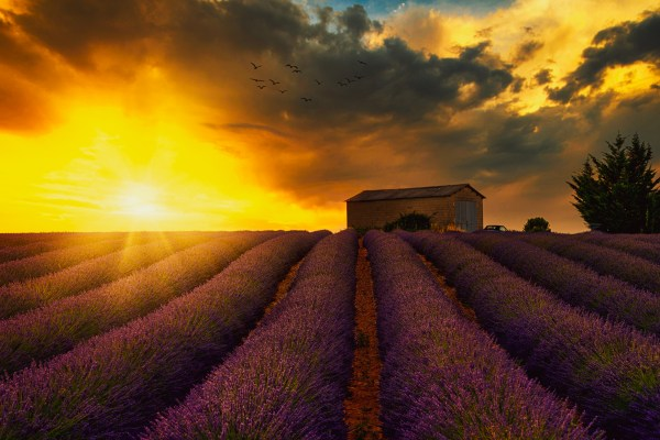How to shoot lavender fields