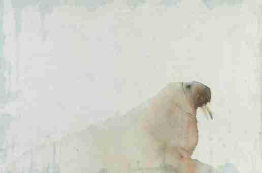 Claire Harkess named David Shepherd Wildlife Foundations' 'Wildlife Artist of the Year'