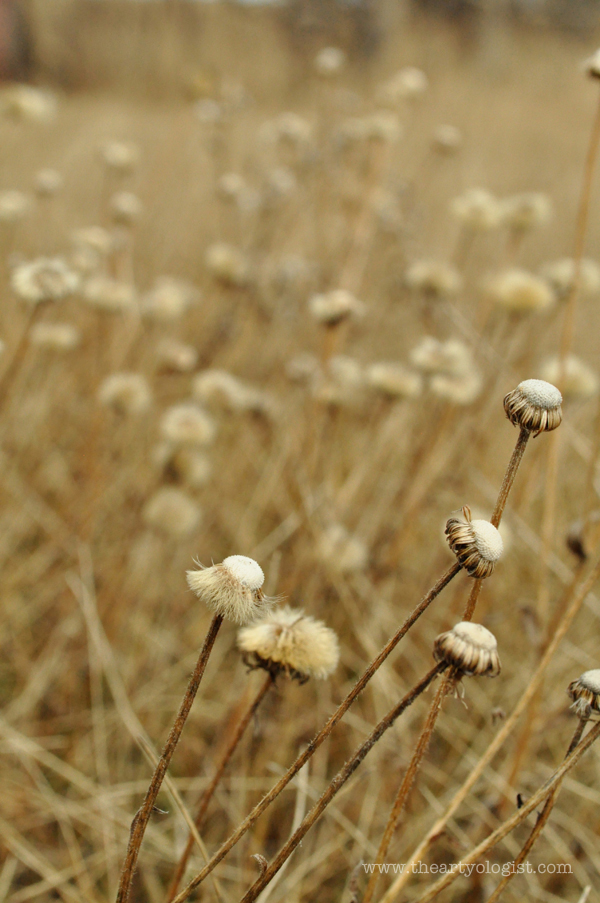 the artyologist- image of grass flowers