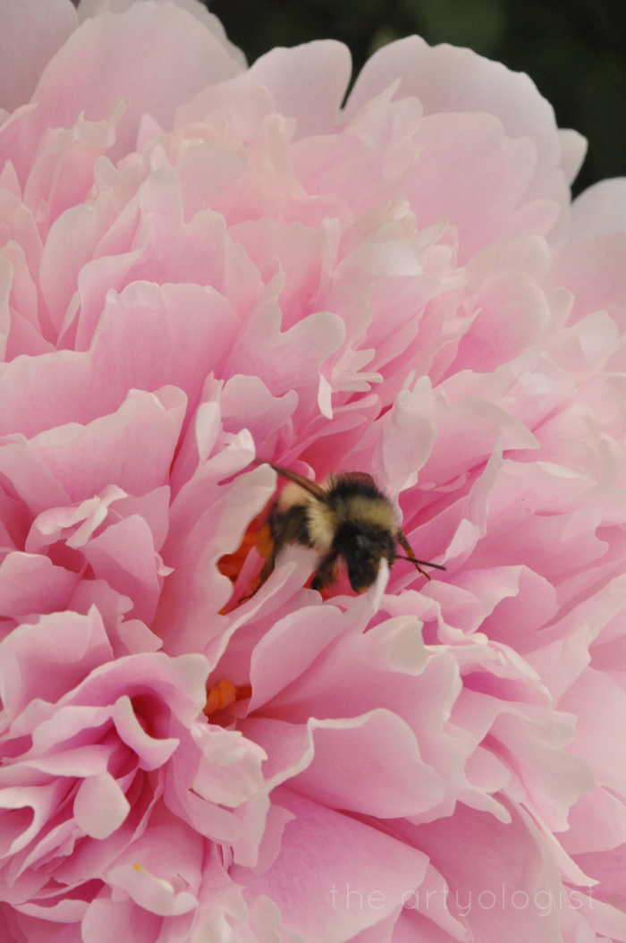 image of bee and peony the artyologist