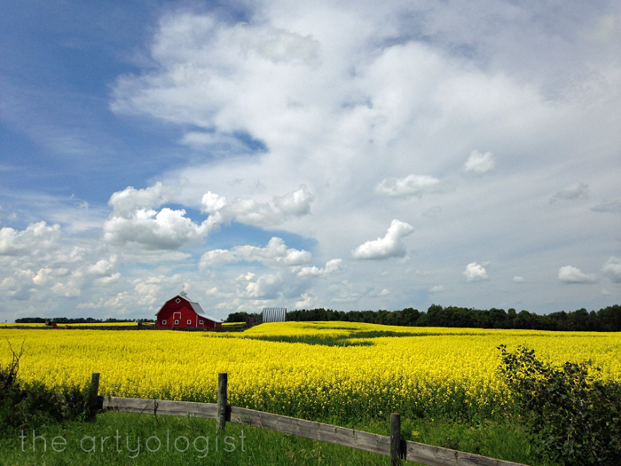 Life Lately: In Photos, The Artyologist - Canola in Full Bloom