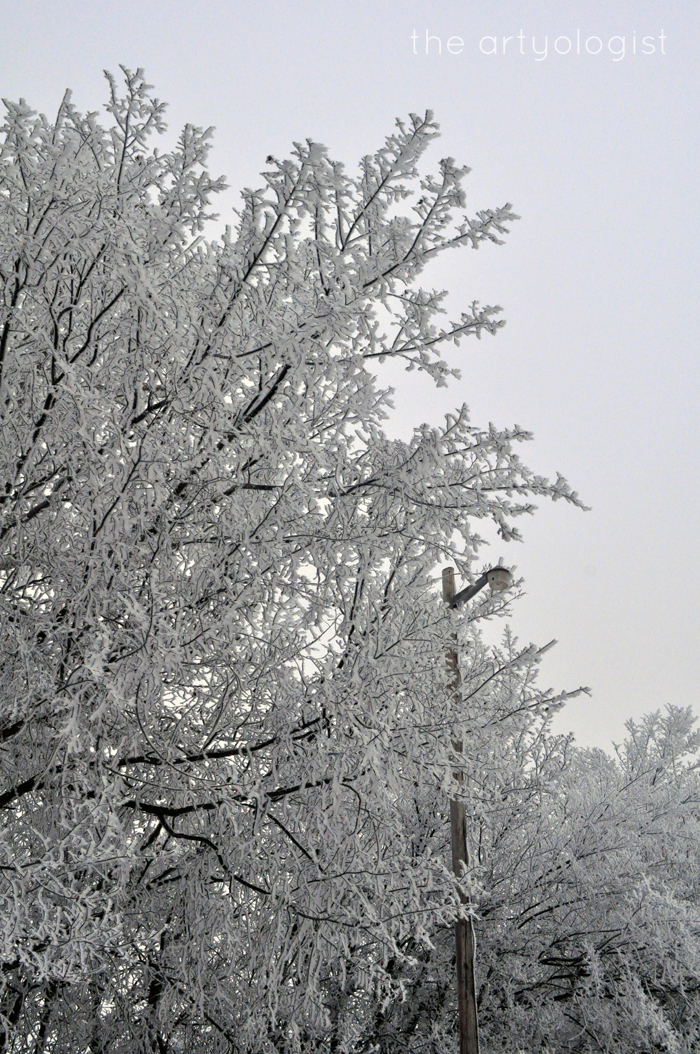 lamppost, rime frost, the artyologist