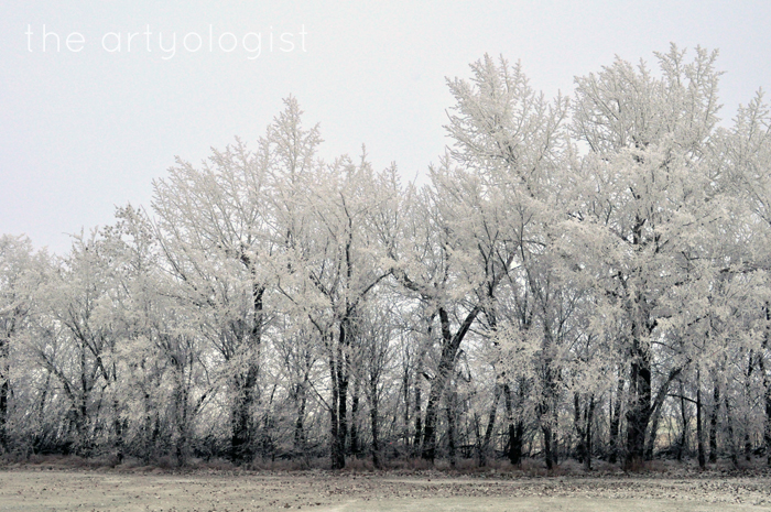 rime frost on line of trees, edge of winter, the artyologist