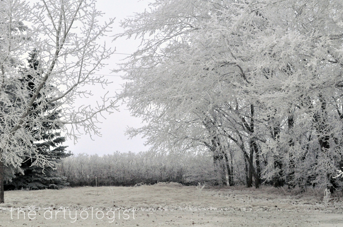 overhanging-trees, edge of winter, rime frost, the artyologist