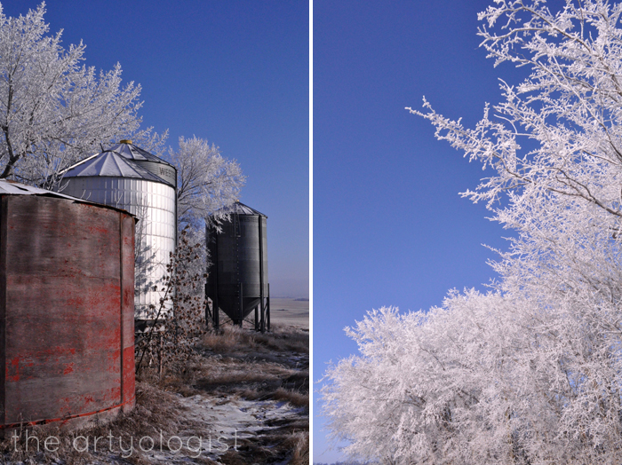 Here Comes The Sun, the artyologist, frosted tree tops and graineries