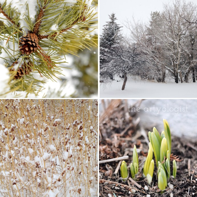 Life Lately: Changing Seasons, the artyologist, spring-storm-and-growth