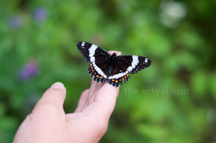 butterfly, the artyologist