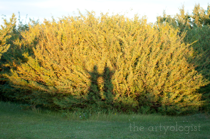 Crossing Over to the Solid Separates Side, the artyologist, shadows-on-bushes