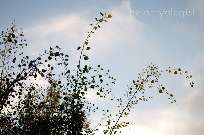 Crossing Over to the Solid Separates Side, the artyologist, tree-silhouette
