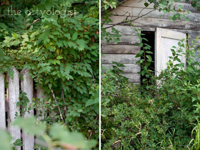 Photo Journal: Fall Time at the Farm, the artyologist, overgrown-places
