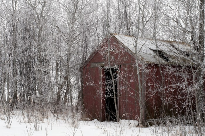 winters-day-red-shed, the artyologist