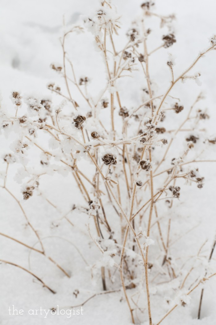winters-day-seedheads, the artyologist