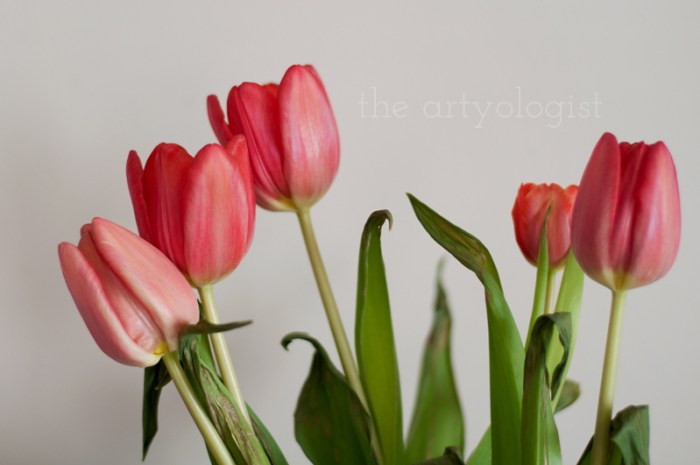 tulips-horizontal, the artyologist