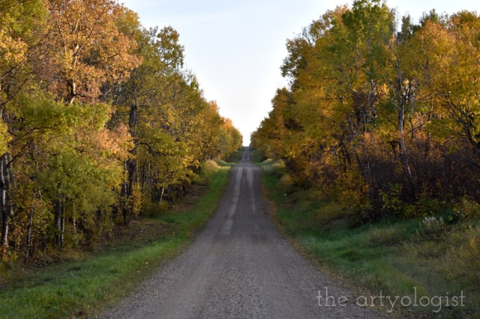 fall leaves in a country lane