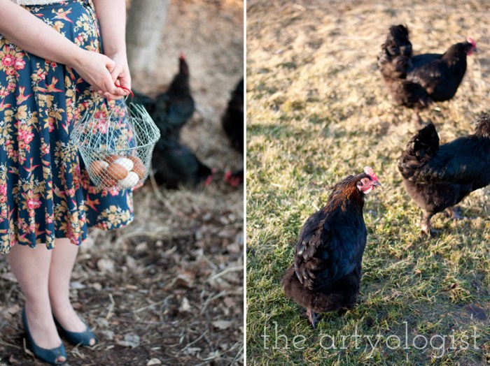 black copper marans chickens and a new easter outfit