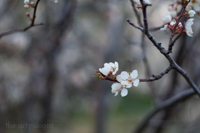 single light pink blossom