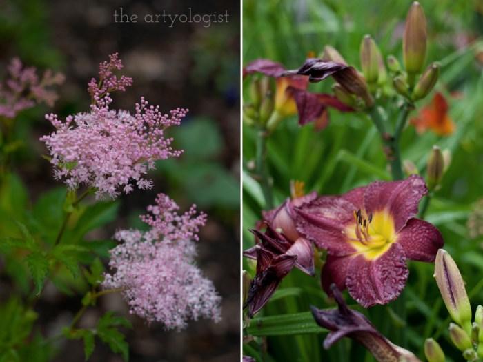 astilbe and a burgundy daylily
