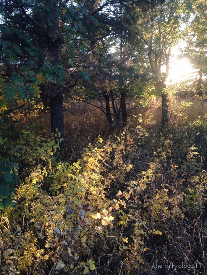 fall leaves with golden evening light