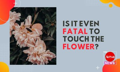 Is it even fatal to touch the flower?