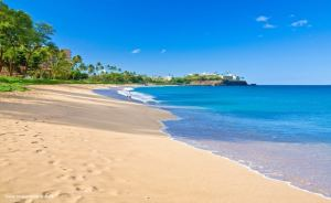 Sea_Shells_Kaanapali_Beach_800_490