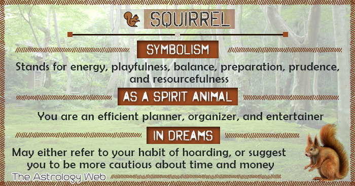 squirrel meaning and symbolism