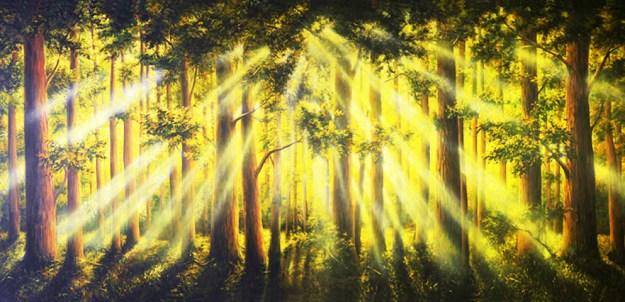 Tranquil Woods Sunrise Professional Scenic Alice in Wonderland Backdrop