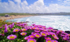 Flowers at Fistral Beach, Cornwall