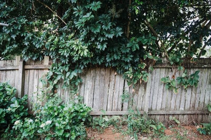 Garden leaves on fence