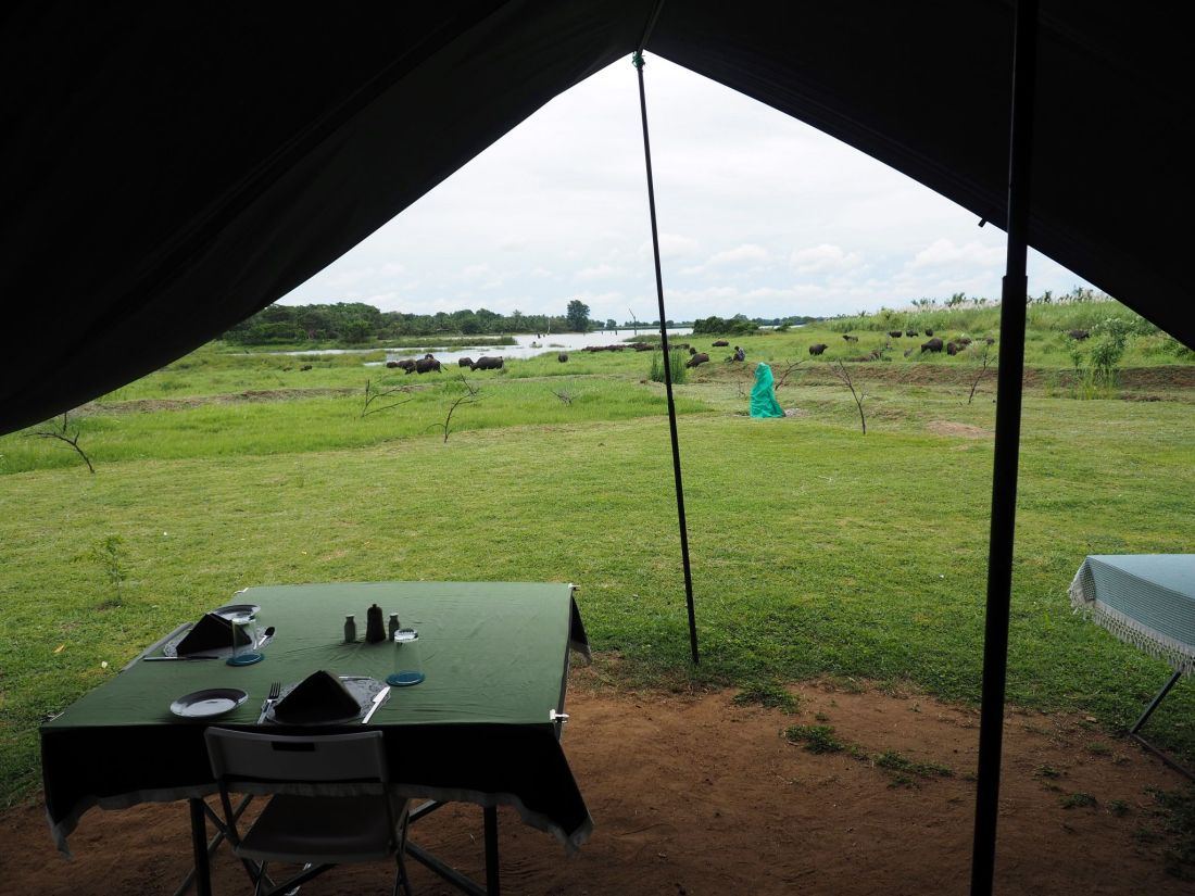 View from Master Campers Udawalawe Tent
