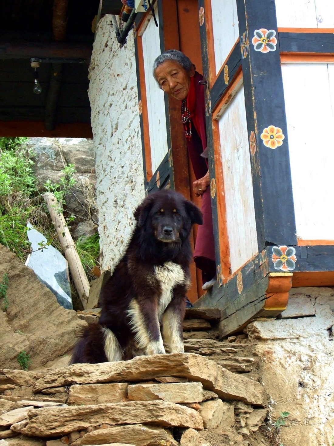 A watchdog guards his mistresss cottage