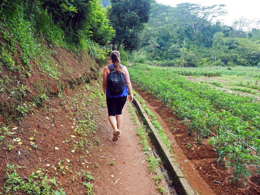 Girl walking along tea plantations