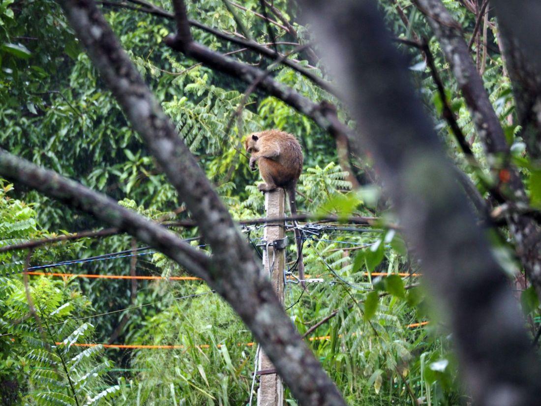 Monkeys in hills Ella