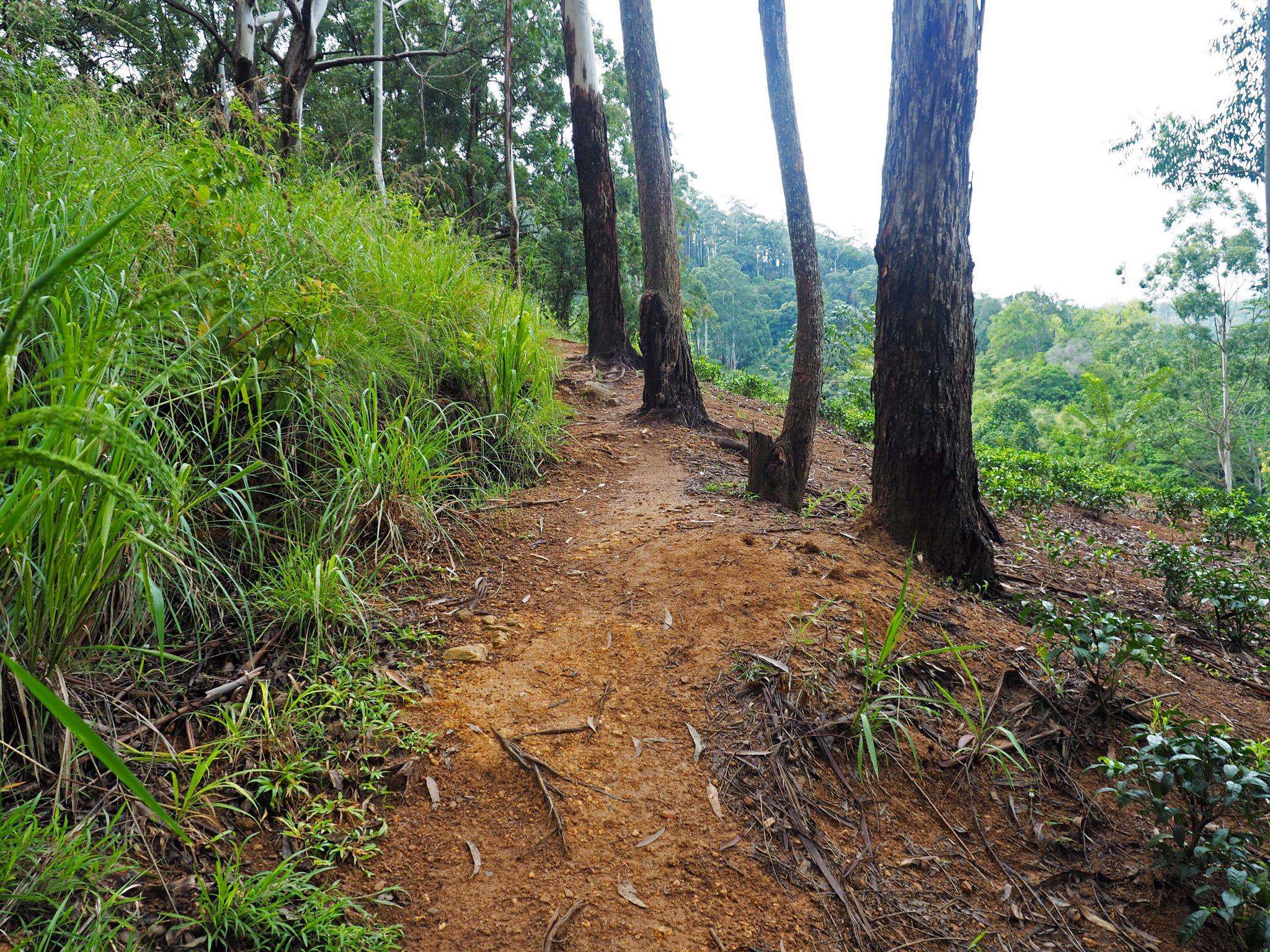 Path Ella Rock