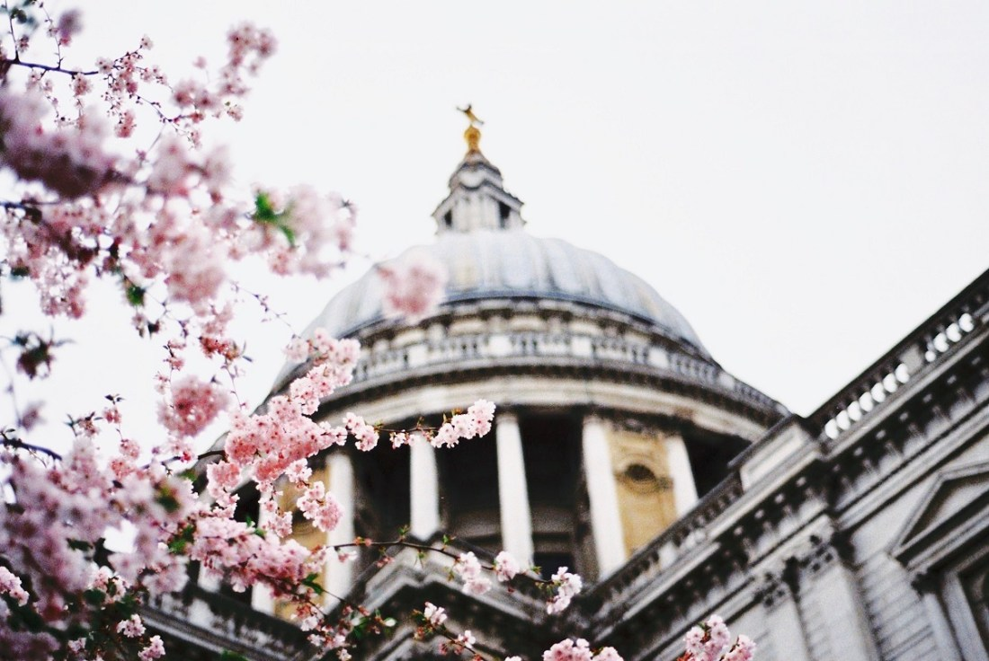 Cherry Blossoms St Pauls Cathedral