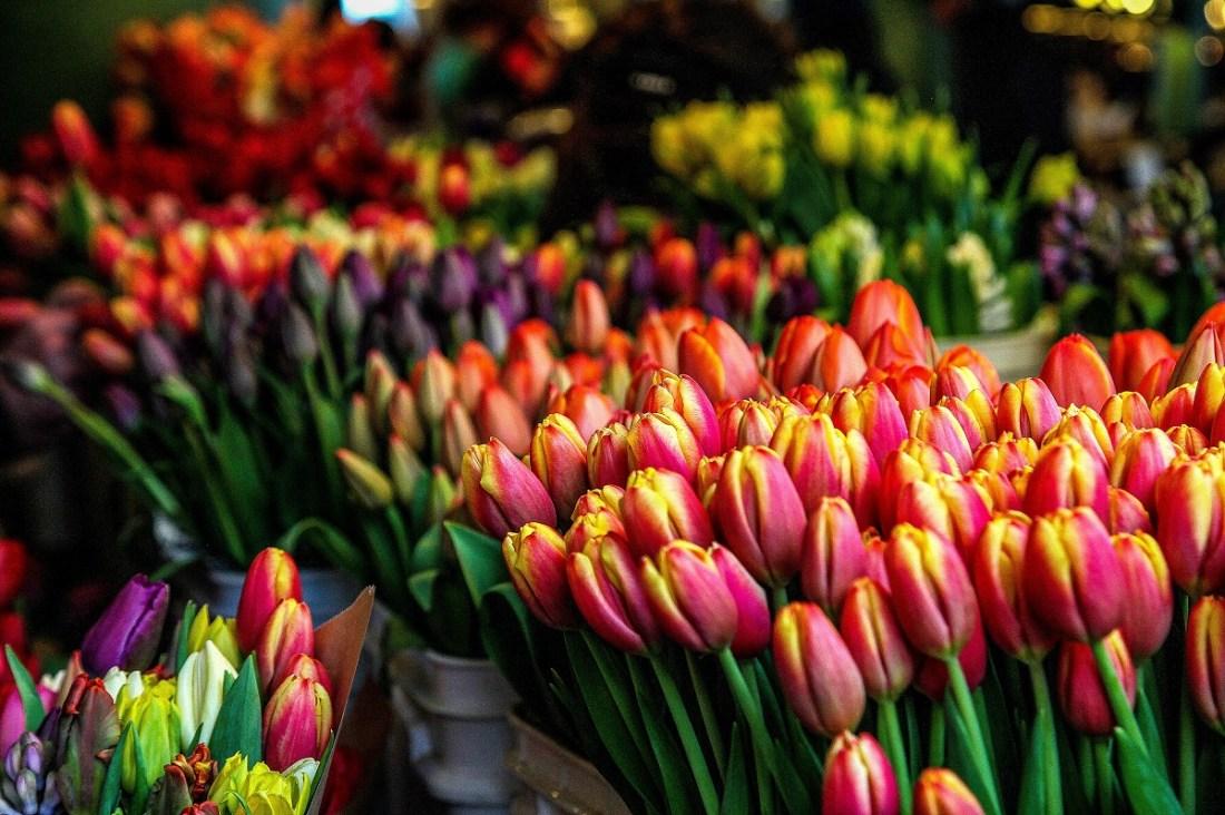Columbia Road Flower Market Tulips
