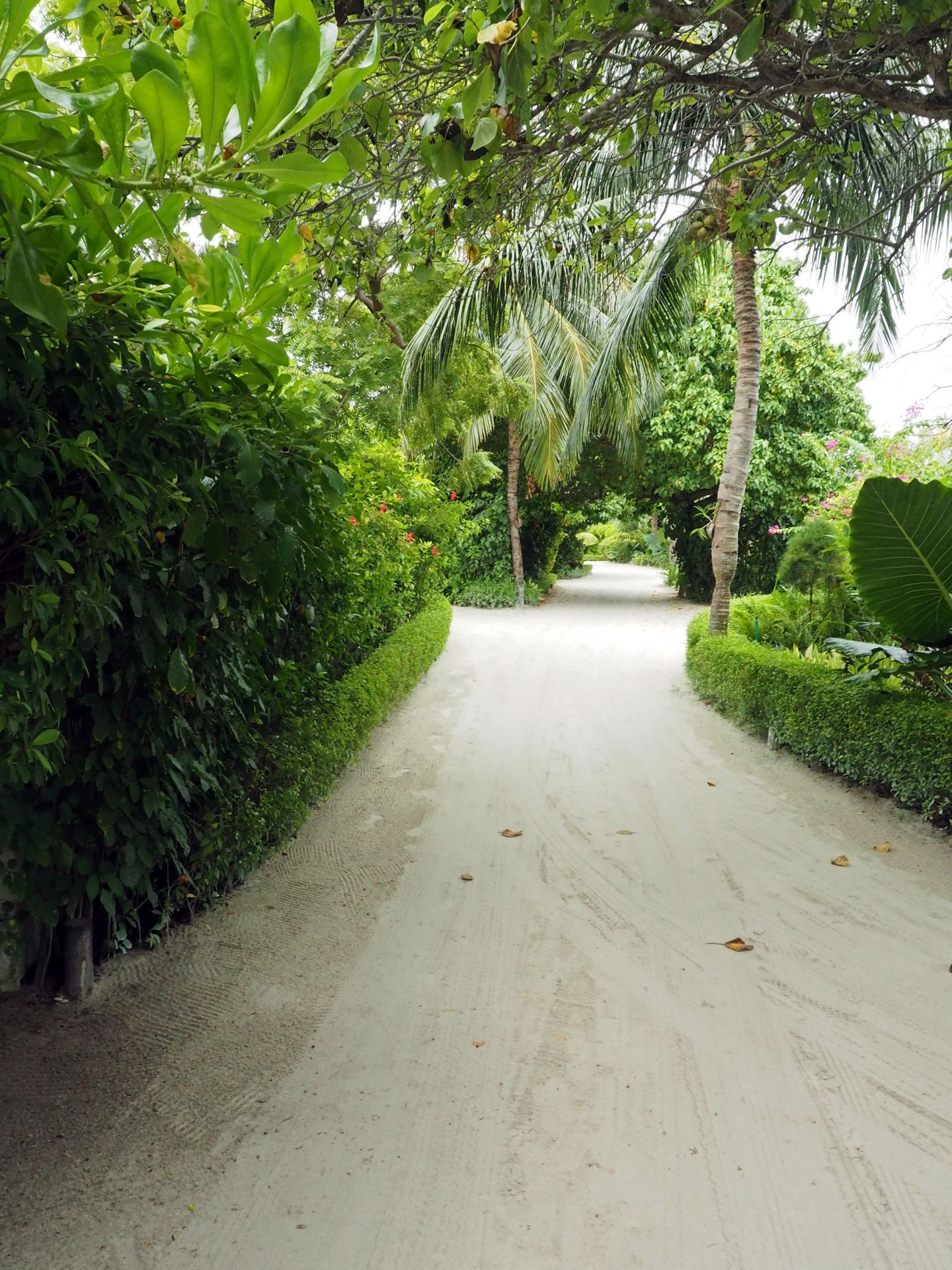 Path through Island LUX Maldives