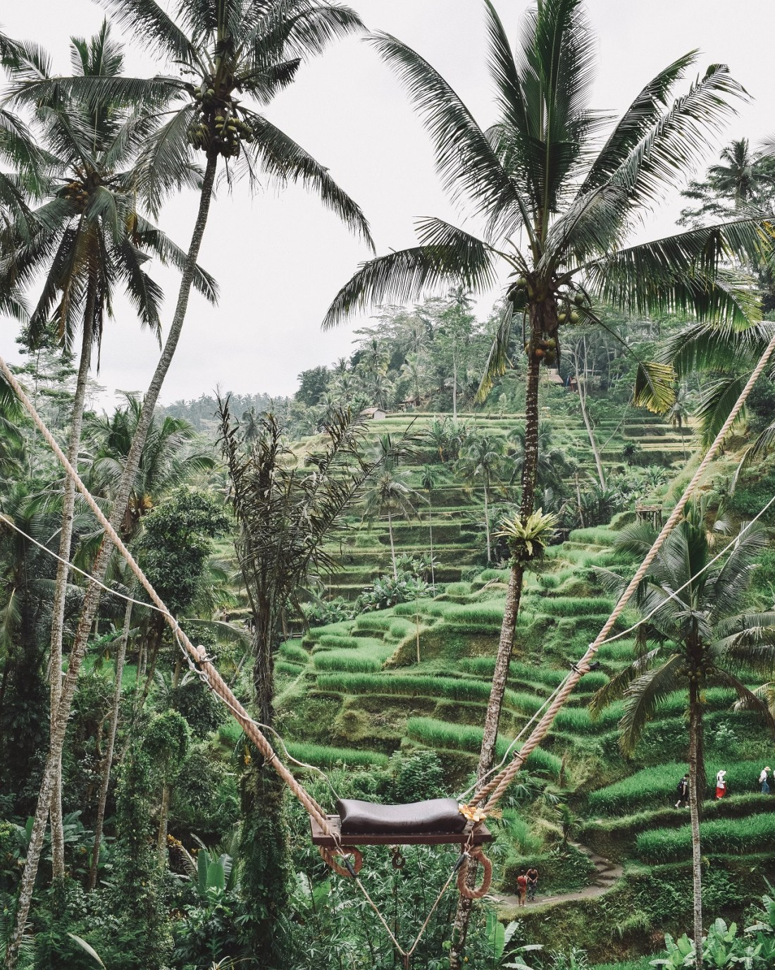 Swing in Bali Mountains with Rice Paddies