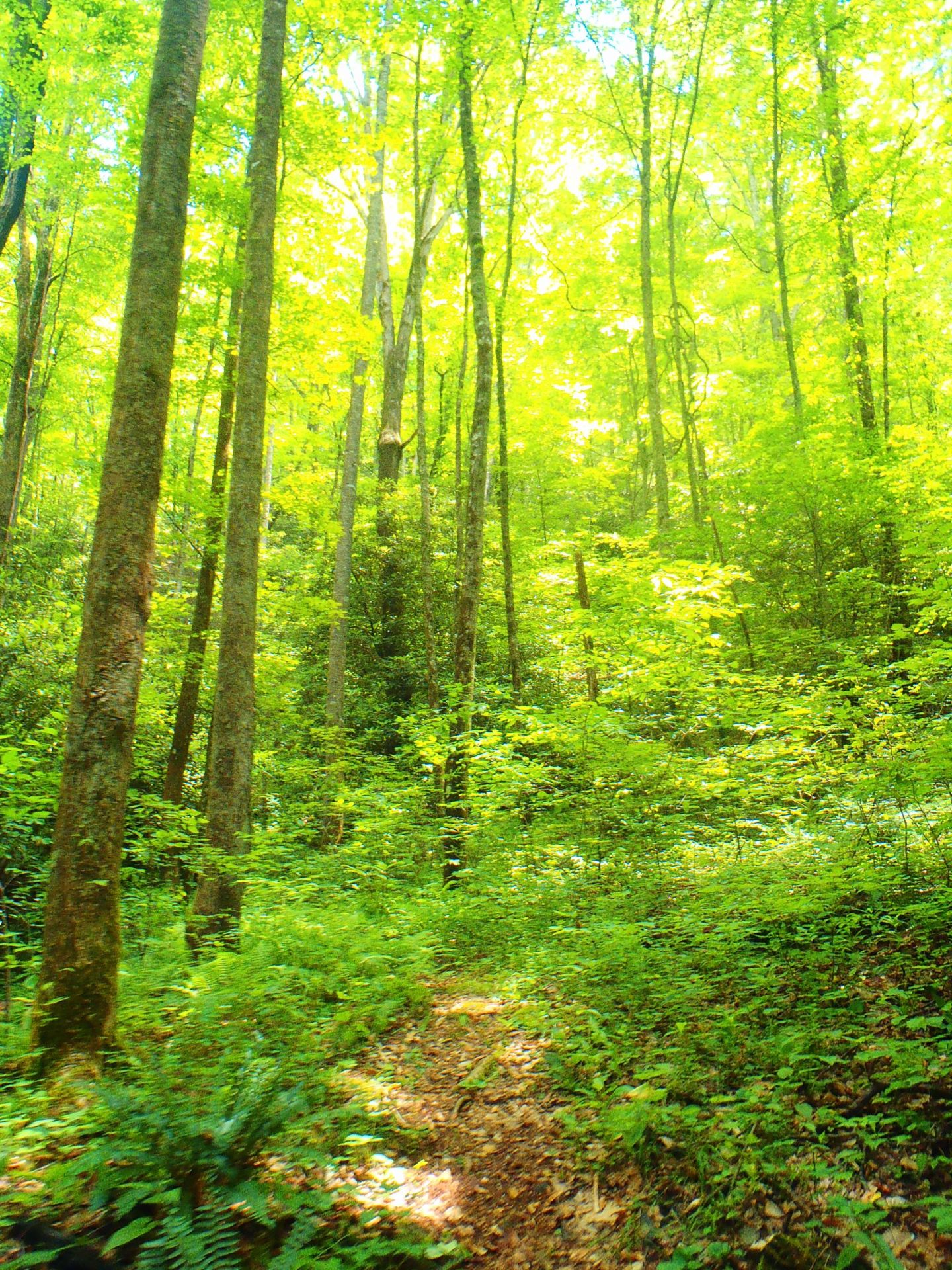 Beautiful green scenery Blue Ridge Mountains