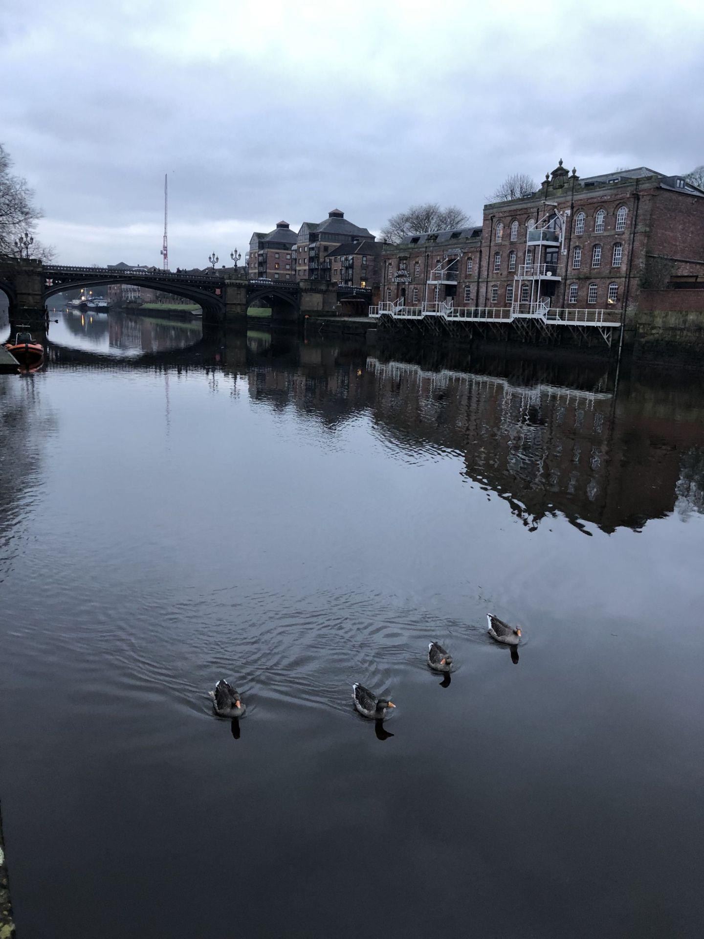 Ducks on York River