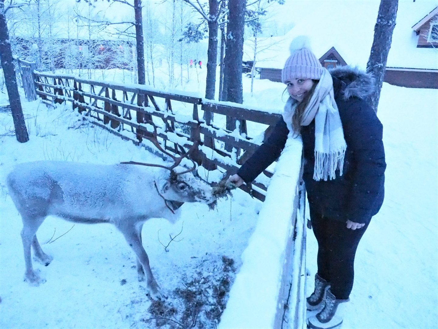 Simone feeding reindeer at Arctic SnowHotel Glass Igloo Rovaniemi