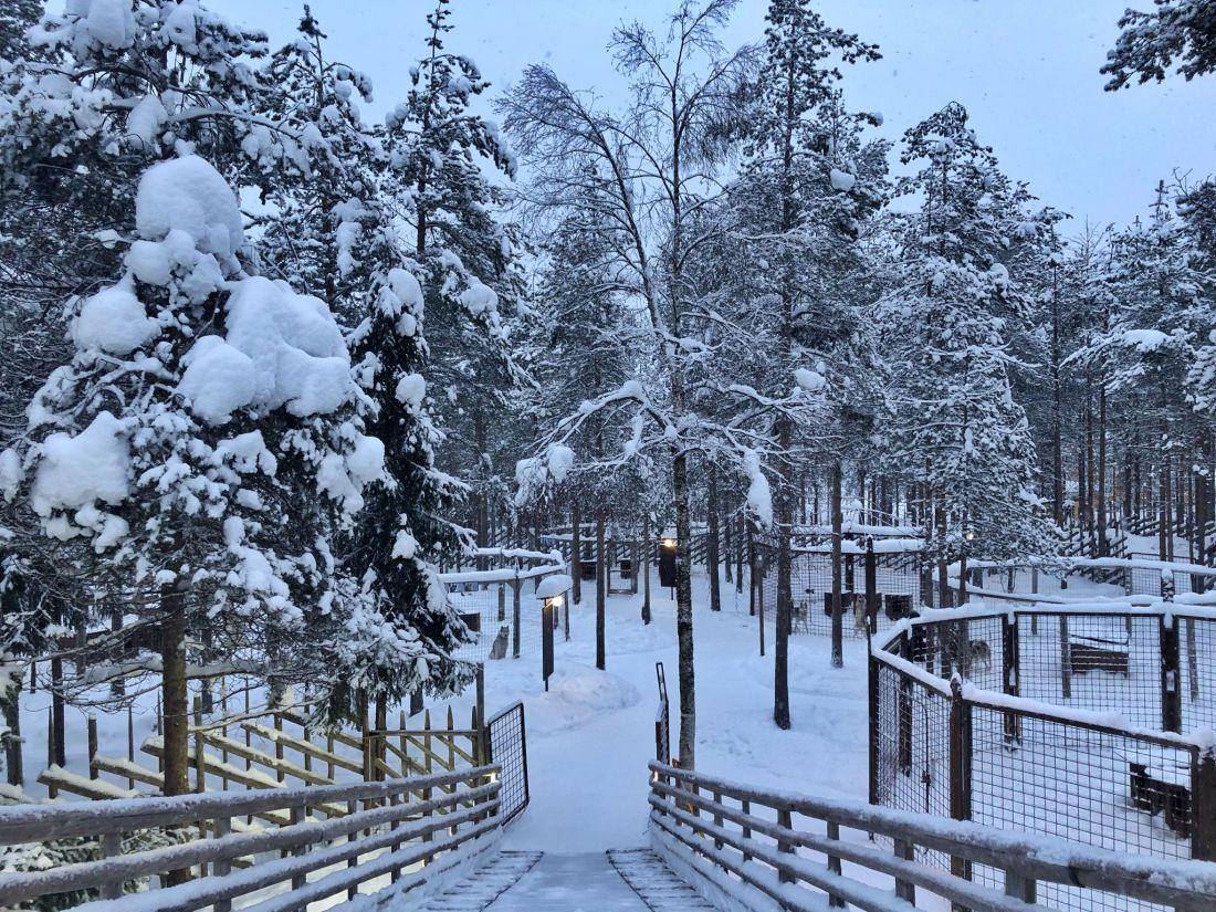 Husky Park at Santa Claus Village Rovaniemi