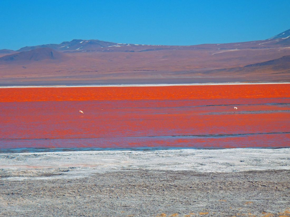 Red Lagoon Bolivia