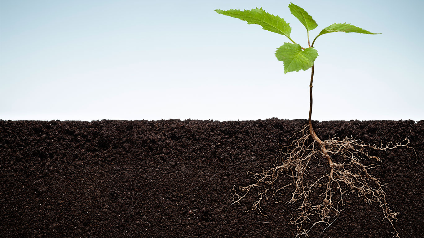 Research shows how plant roots sense and react to soil for Soil for plants