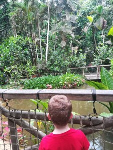 Rainforest Biome Eden Project