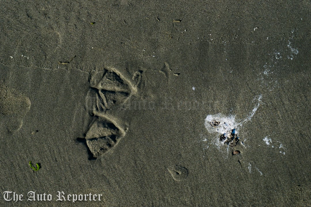 These were the only footprints from this bird. He landed, poo'd and took off.