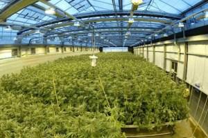 GW Growing Facility