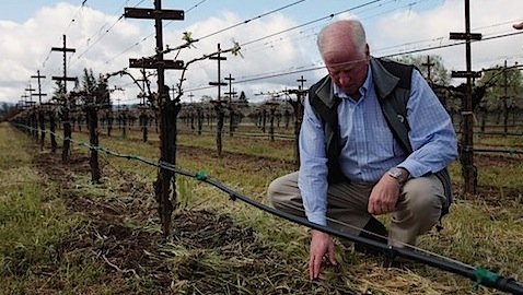 Congressman Mike Thompson in his vineyard.  Photo by Jim Wilson/The New York Times